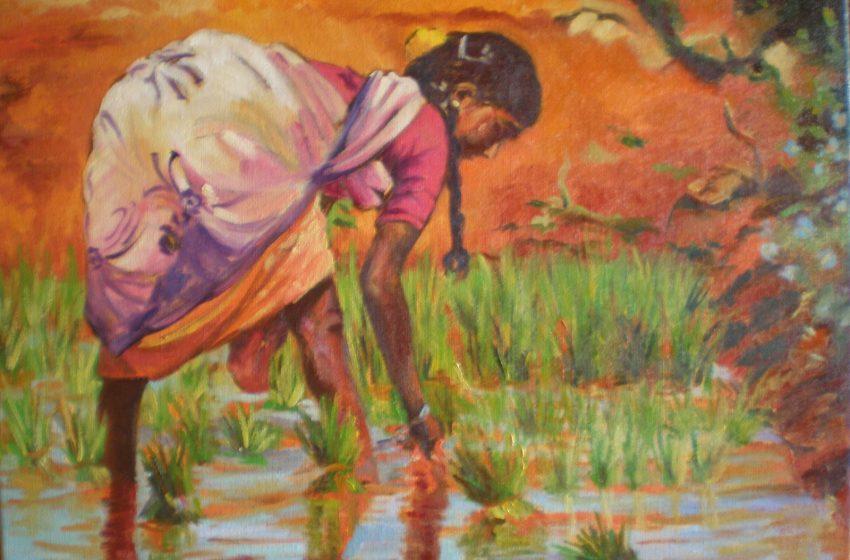 Nacidas del arroz