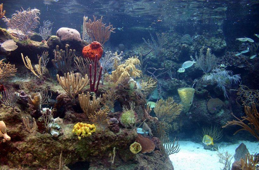 El arrecife