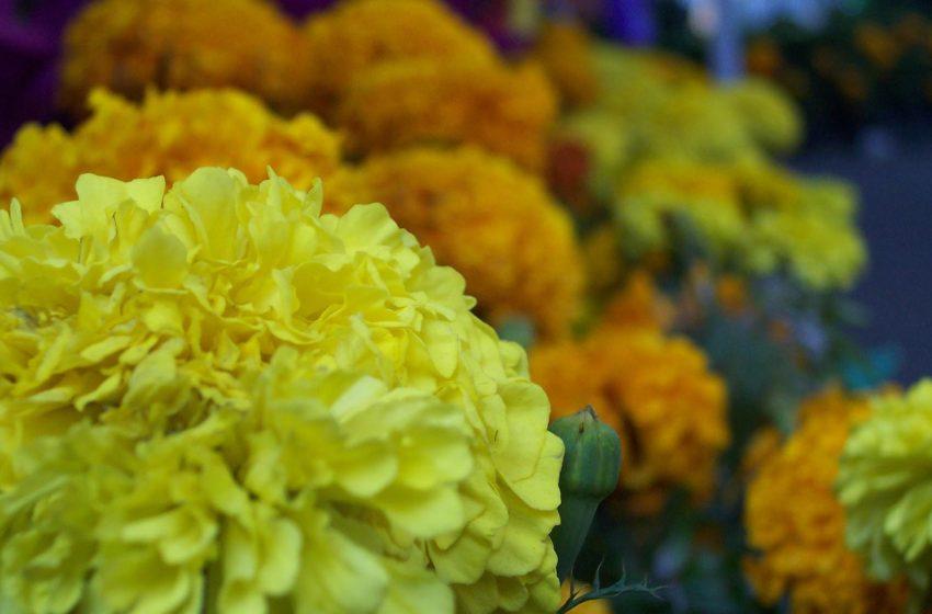 Día de muertos: Costumbres y tradiciones
