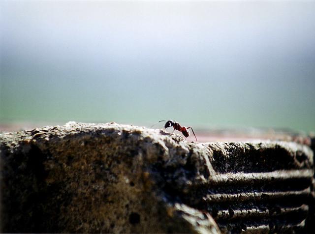 Pecera de hormigas