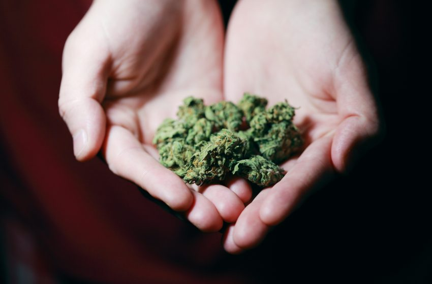 Diputados proponen crear empresa pública para distribución de marihuana