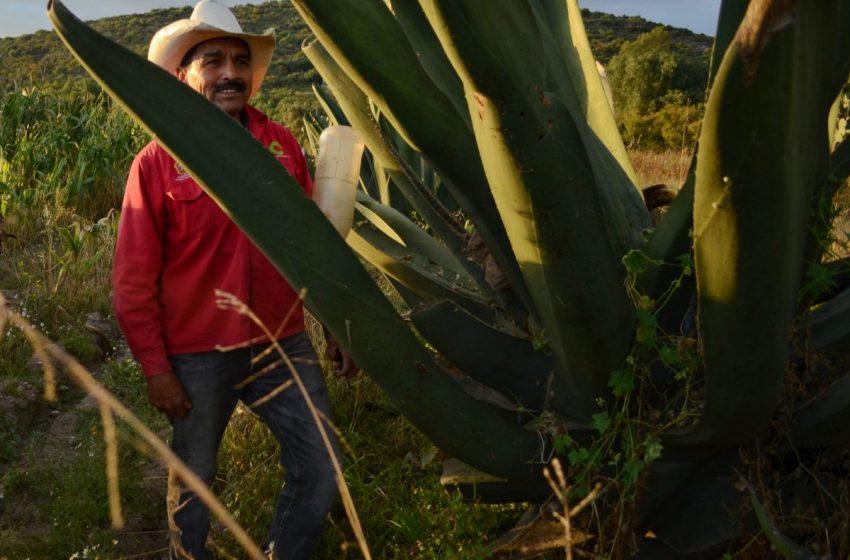 El Tlachiquero: por amor al pulque
