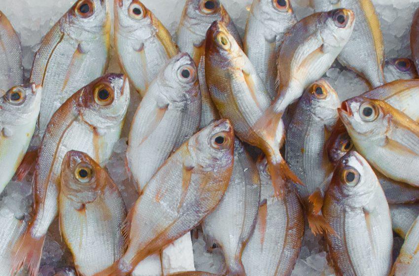 Los peces no gritan su dolor, pero también sufren