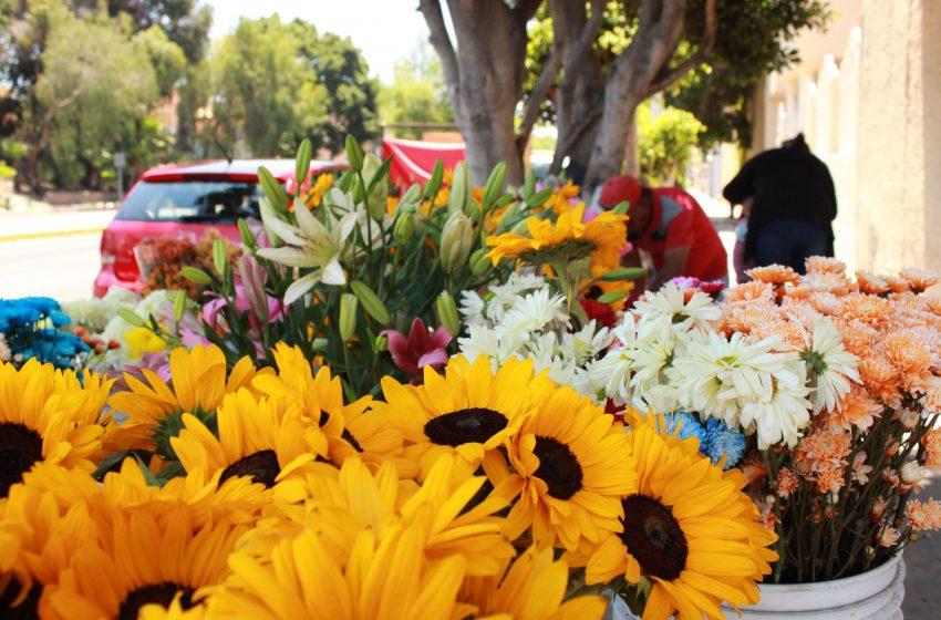 Del jardín a tu mano: Entrevista a florista